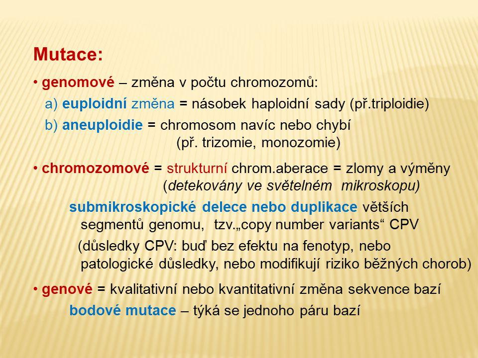 Mutace: genomové – změna v počtu chromozomů: a) euploidní změna = násobek haploidní sady (př.triploidie) b) aneuploidie = chromosom navíc nebo chybí (