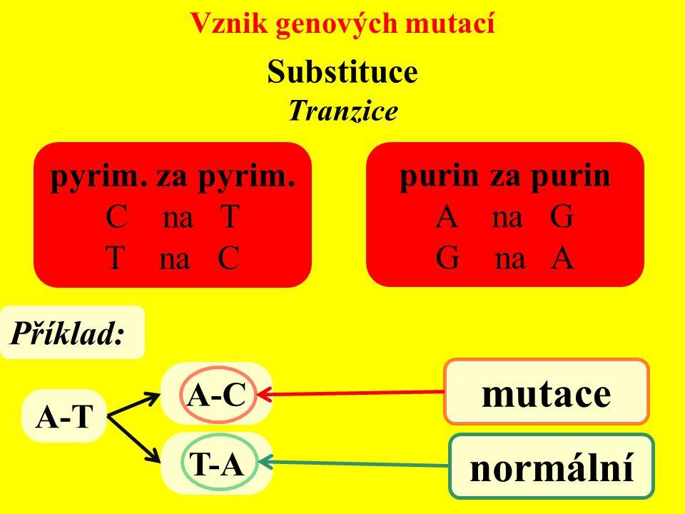 Vznik genových mutací Substituce Tranzice pyrim. za pyrim. C na T T na C purin za purin A na G G na A A-T A-C T-A Příklad: mutace normální