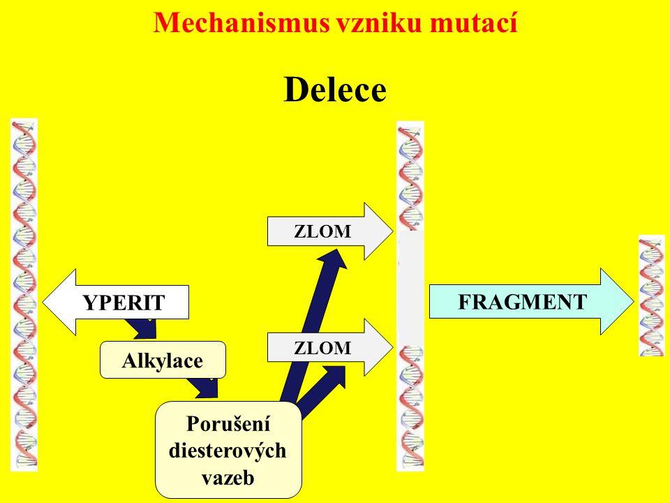 Mechanismus vzniku mutací Delece YPERIT Alkylace Porušení diesterových vazeb ZLOM FRAGMENT ZLOM
