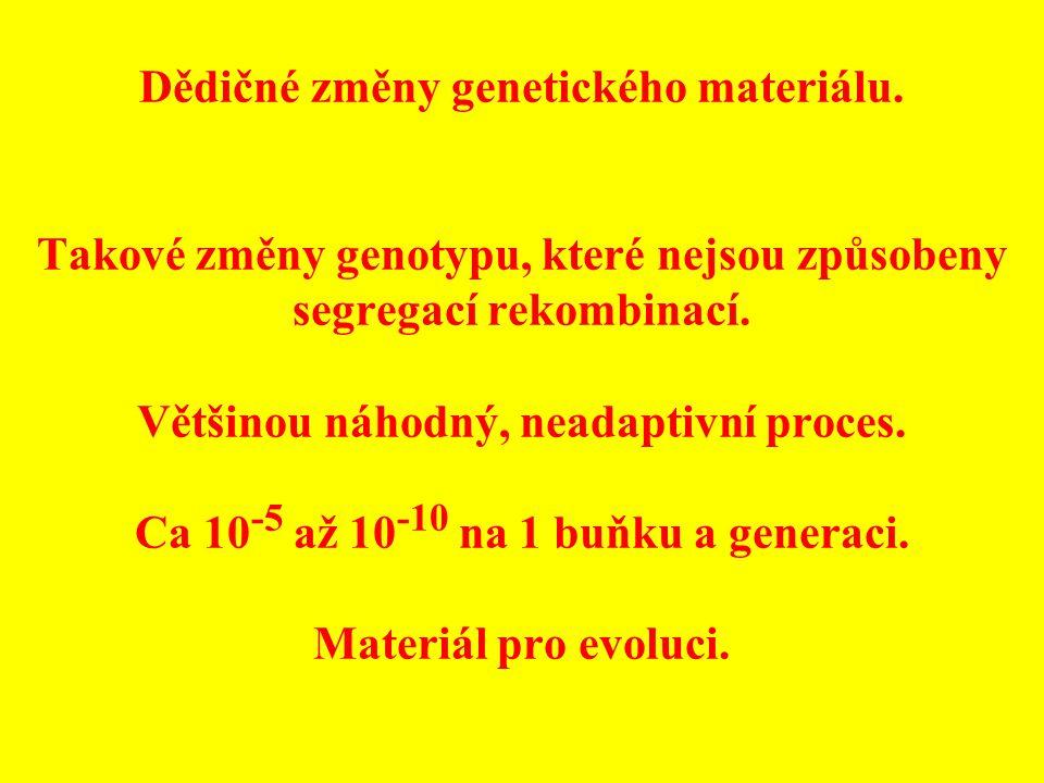 Dědičné změny genetického materiálu. Takové změny genotypu, které nejsou způsobeny segregací rekombinací. Většinou náhodný, neadaptivní proces. Ca 10