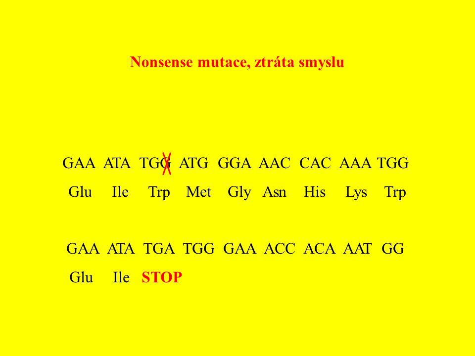 Nonsense mutace, ztráta smyslu GAA ATA TGG ATG GGA AAC CAC AAA TGG Glu Ile Trp Met Gly Asn His Lys Trp GAA ATA TGA TGG GAA ACC ACA AAT GG Glu Ile STOP