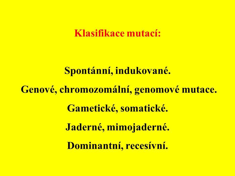 Klasifikace mutací: Spontánní, indukované. Genové, chromozomální, genomové mutace. Gametické, somatické. Jaderné, mimojaderné. Dominantní, recesívní.