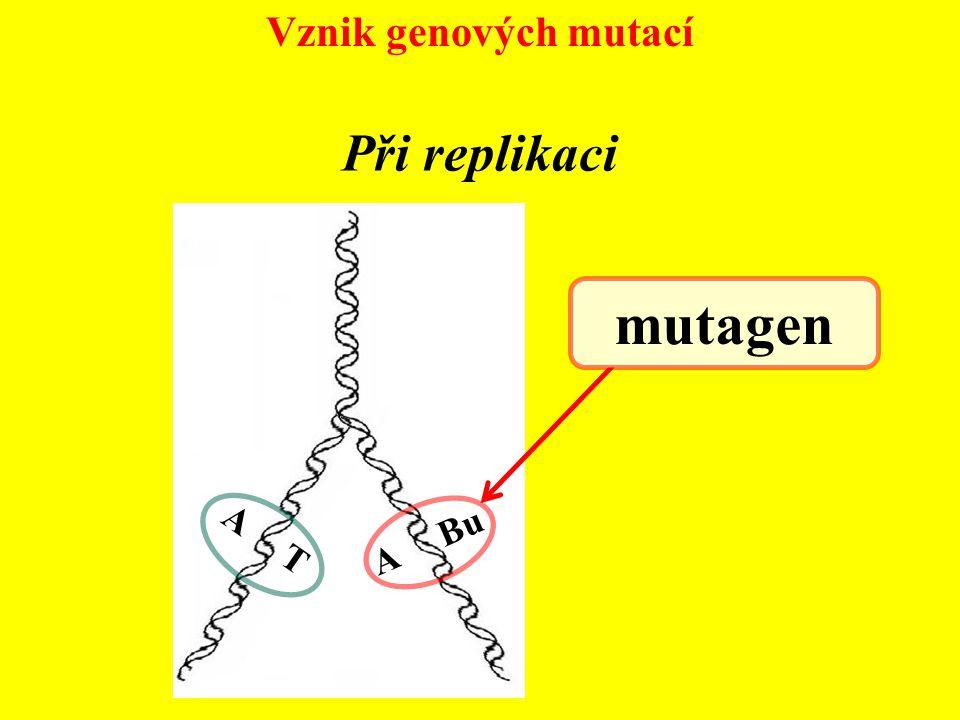Vznik genových mutací A T mutagen Při replikaci A Bu