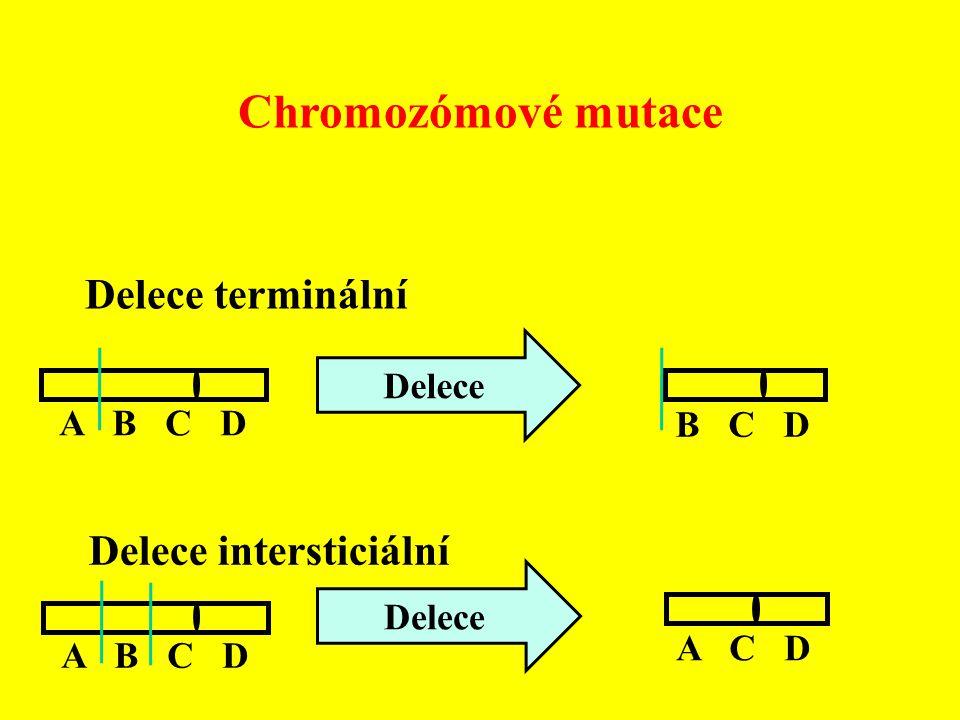 Delece terminální A B C D B C D Delece Delece intersticiální Delece A B C D A C D