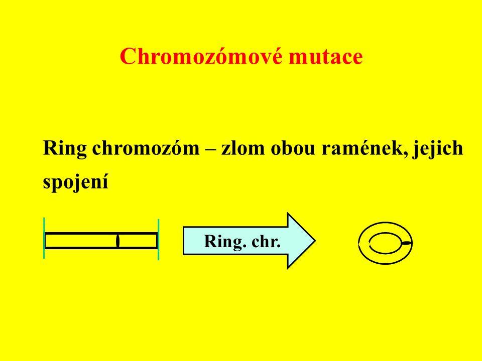 Chromozómové mutace Ring chromozóm – zlom obou ramének, jejich spojení Ring. chr.