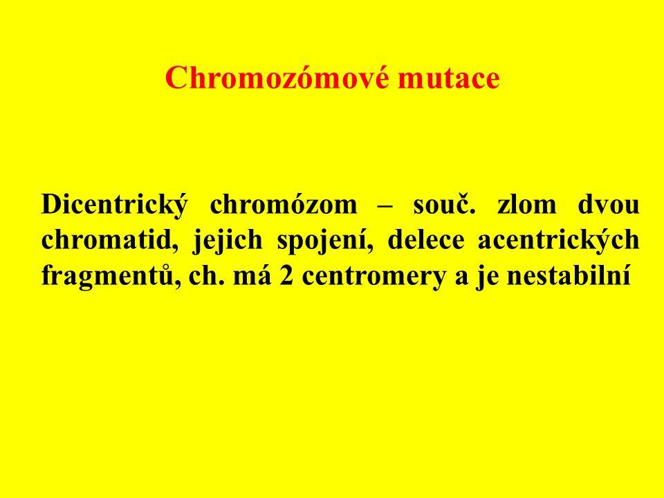 Chromozómové mutace Dicentrický chromózom – souč. zlom dvou chromatid, jejich spojení, delece acentrických fragmentů, ch. má 2 centromery a je nestabi