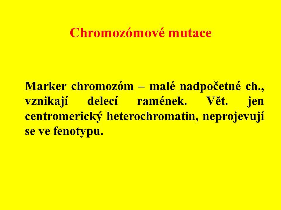 Chromozómové mutace Marker chromozóm – malé nadpočetné ch., vznikají delecí ramének. Vět. jen centromerický heterochromatin, neprojevují se ve fenotyp