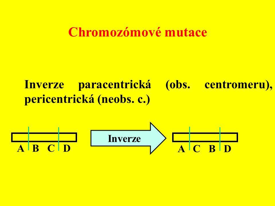 Chromozómové mutace Inverze paracentrická (obs. centromeru), pericentrická (neobs. c.) A B C D A C B D Inverze