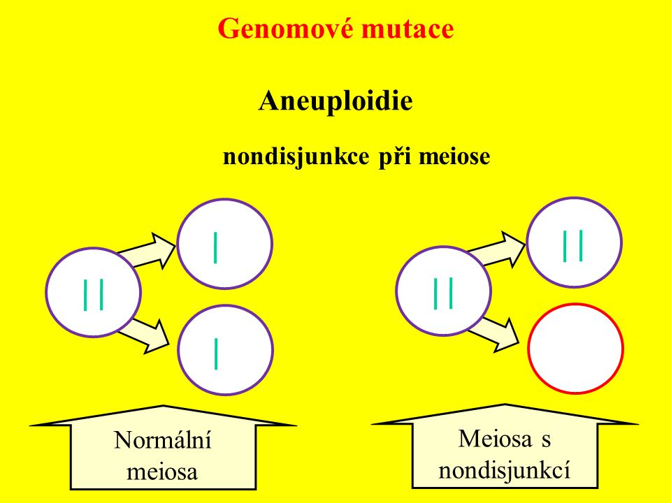 Genomové mutace Aneuploidie nondisjunkce při meiose Meiosa s nondisjunkcí Normální meiosa