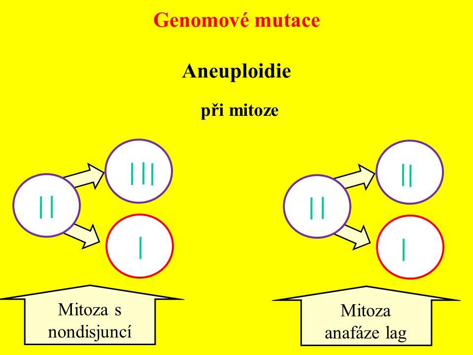 při mitoze Mitoza s nondisjuncí Mitoza anafáze lag Genomové mutace Aneuploidie