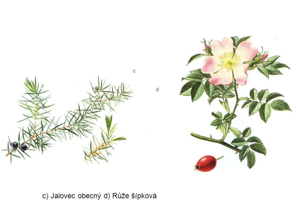 c) Jalovec obecný d) Růže šípková