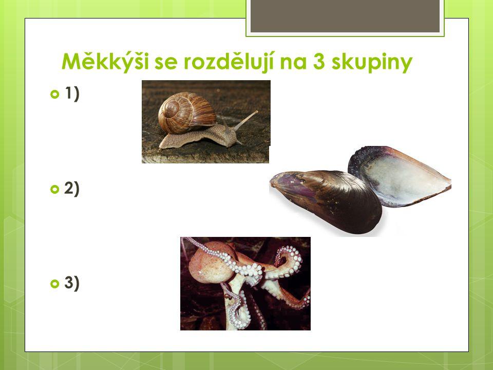 Měkkýši se rozdělují na 3 skupiny  1) plži  2) mlži  3) hlavonožci