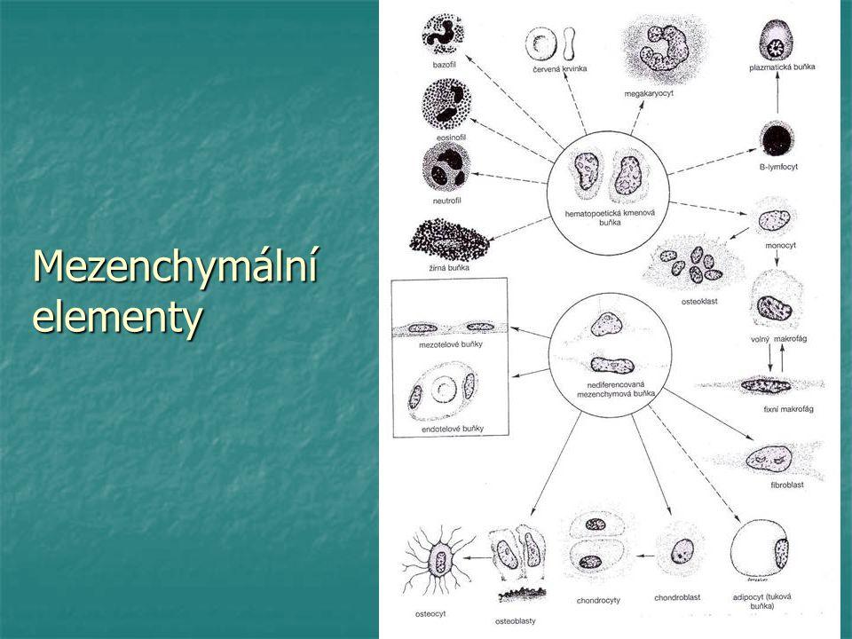 Mezenchymální elementy