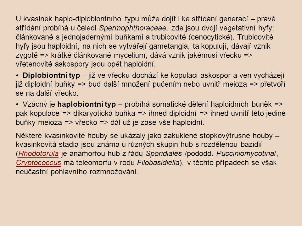 U kvasinek haplo-diplobiontního typu může dojít i ke střídání generací – pravé střídání probíhá u čeledi Spermophthoraceae, zde jsou dvojí vegetativní hyfy: článkované s jednojadernými buňkami a trubicovité (cenocytické).