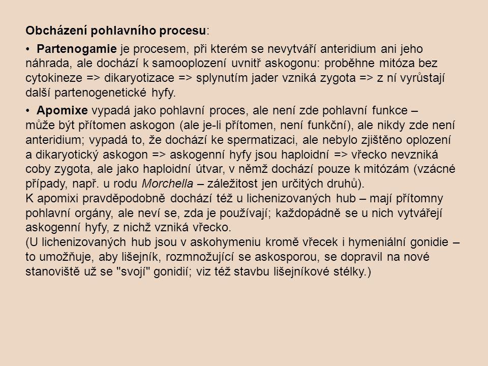 Obcházení pohlavního procesu: Partenogamie je procesem, při kterém se nevytváří anteridium ani jeho náhrada, ale dochází k samooplození uvnitř askogonu: proběhne mitóza bez cytokineze => dikaryotizace => splynutím jader vzniká zygota => z ní vyrůstají další partenogenetické hyfy.