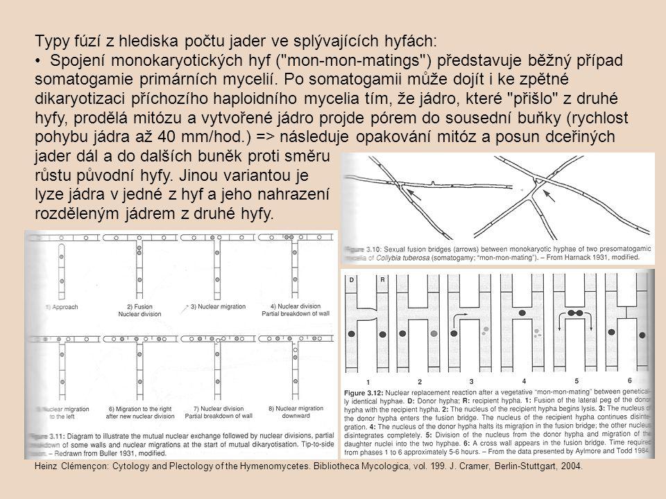 Typy fúzí z hlediska počtu jader ve splývajících hyfách: Spojení monokaryotických hyf ( mon-mon-matings ) představuje běžný případ somatogamie primárních mycelií.