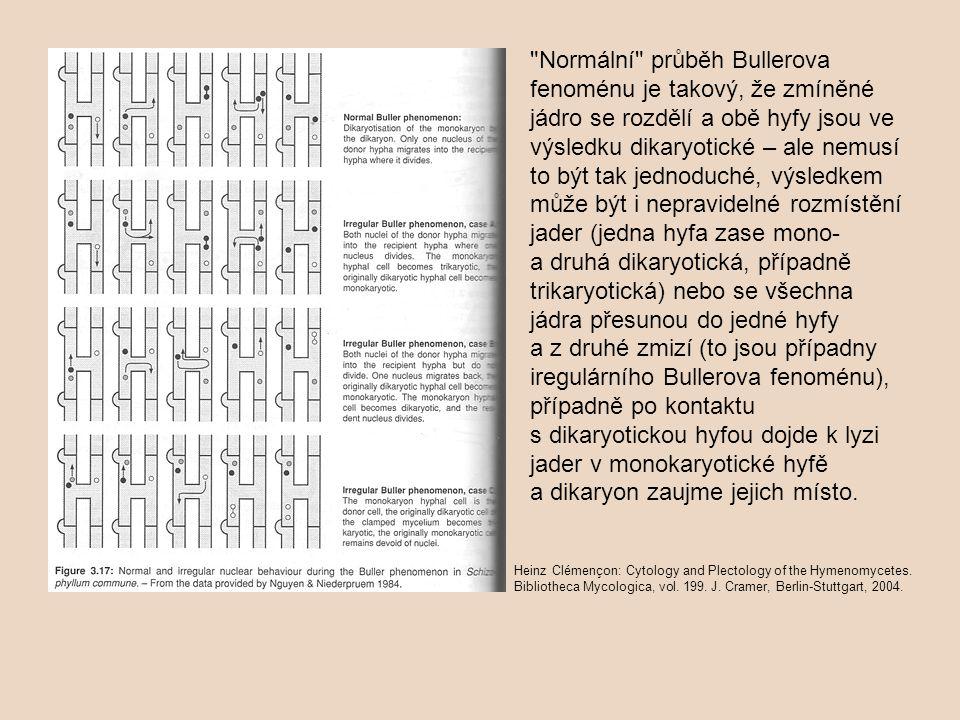 Normální průběh Bullerova fenoménu je takový, že zmíněné jádro se rozdělí a obě hyfy jsou ve výsledku dikaryotické – ale nemusí to být tak jednoduché, výsledkem může být i nepravidelné rozmístění jader (jedna hyfa zase mono- a druhá dikaryotická, případně trikaryotická) nebo se všechna jádra přesunou do jedné hyfy a z druhé zmizí (to jsou případny iregulárního Bullerova fenoménu), případně po kontaktu s dikaryotickou hyfou dojde k lyzi jader v monokaryotické hyfě a dikaryon zaujme jejich místo.