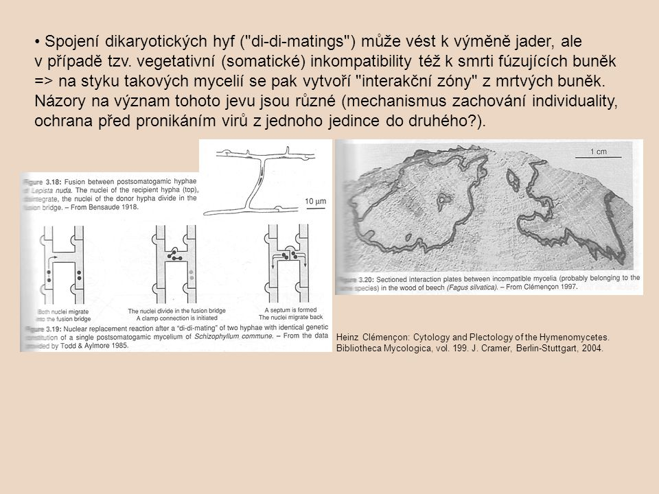 Spojení dikaryotických hyf ( di-di-matings ) může vést k výměně jader, ale v případě tzv.