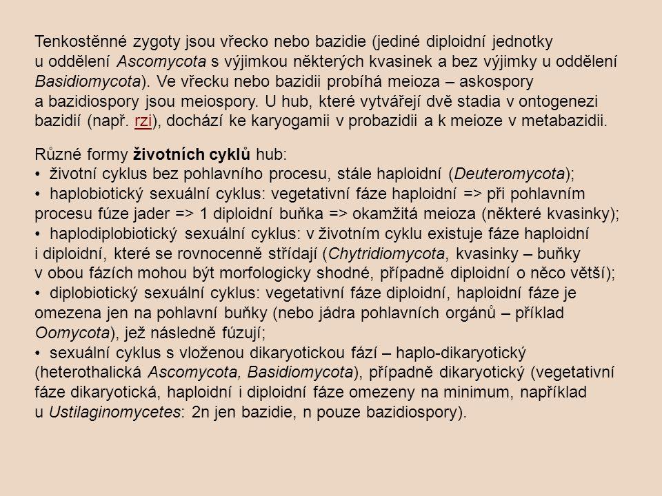 Tenkostěnné zygoty jsou vřecko nebo bazidie (jediné diploidní jednotky u oddělení Ascomycota s výjimkou některých kvasinek a bez výjimky u oddělení Basidiomycota).
