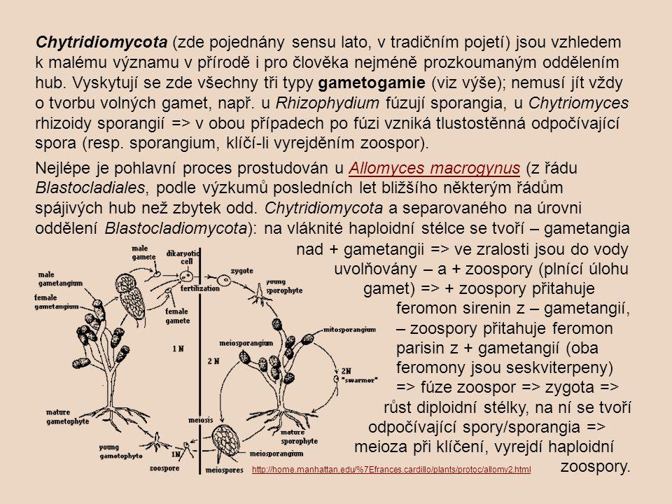 Chytridiomycota (zde pojednány sensu lato, v tradičním pojetí) jsou vzhledem k malému významu v přírodě i pro člověka nejméně prozkoumaným oddělením hub.