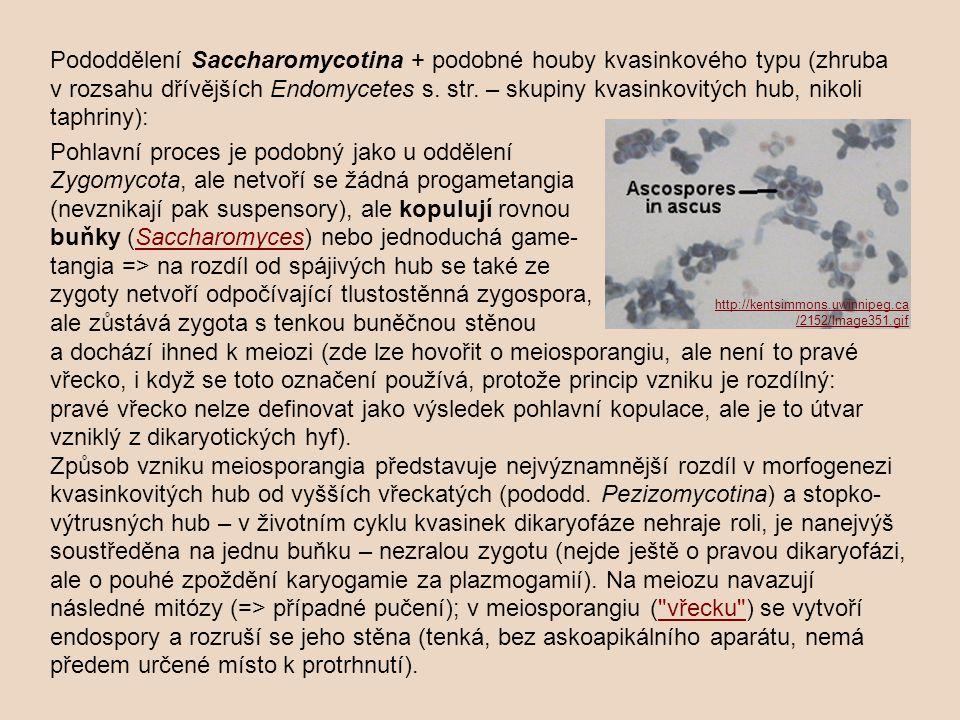 U kvasinek máme typy haplobiontní, haplo-diplobiontní i diplobiontní: Haplo-diplobiontní typ – z vřecka se uvolní haploidní askospory => buď nepohlavní rozmnožování (pučení), nebo kopulace => zygota => rovněž může vytvářet pučením blastospory (teď už ovšem diploidní, ale morfologicky stejné) => jen z těchto diploidních může vzniknout proběhnutím meiozy vřecko.Haplo-diplobiontní typ http://www.botanik.biologie.uni-muenchen.de/botsyst/m-sacch.html http://www.medils.org/hr/index.php/taddei-svetec-grupa/genetics-of-death-in-yeast/