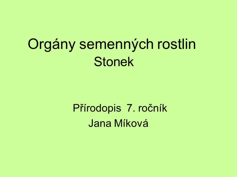 Orgány semenných rostlin Stonek Přírodopis 7. ročník Jana Míková