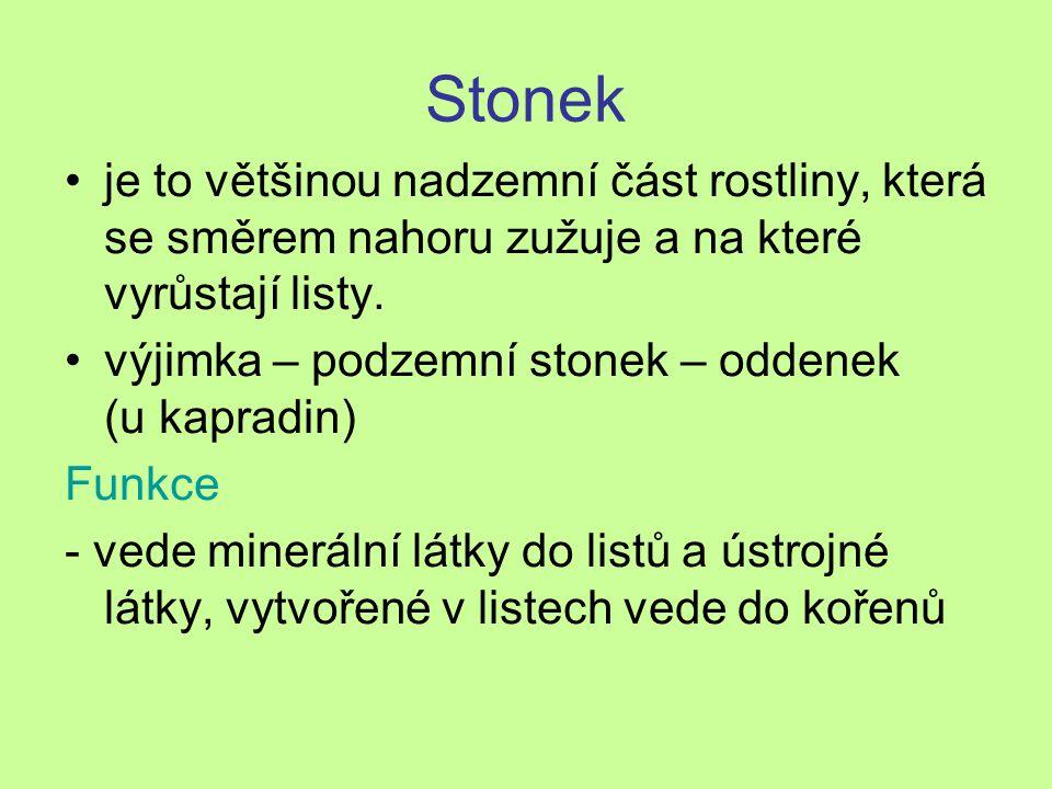 Stonek je to většinou nadzemní část rostliny, která se směrem nahoru zužuje a na které vyrůstají listy. výjimka – podzemní stonek – oddenek (u kapradi