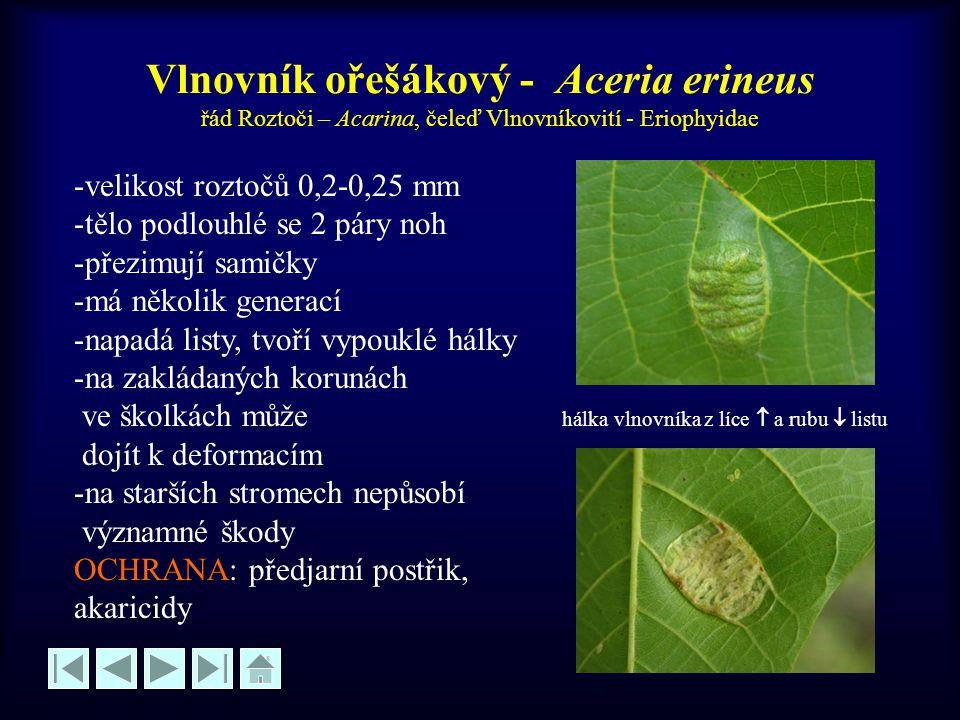 Vlnovník puchýřovitý - Aceria tristriatus -velikost roztočů 0,2-0,25 mm -tělo podlouhlé se 2 páry noh -přezimují samičky -má několik generací -tvoří hálky na obou stranách listů -hálky zpočátku zelené, později červenavé a hnědnoucí OCHRANA: předjarní postřik, akaricidy