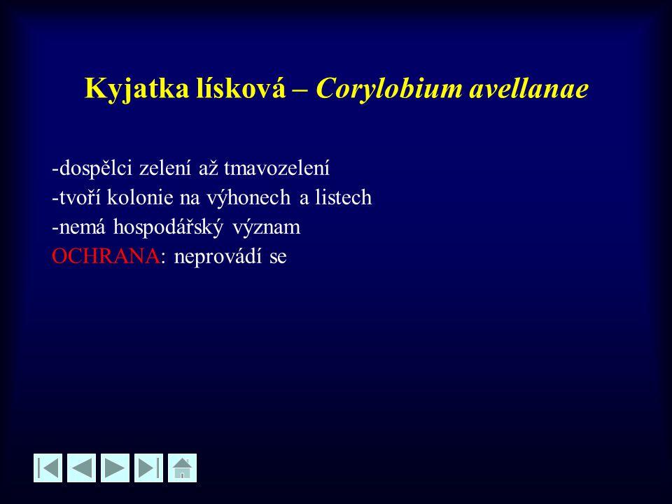 Kyjatka lísková – Corylobium avellanae -dospělci zelení až tmavozelení -tvoří kolonie na výhonech a listech -nemá hospodářský význam OCHRANA: neprovád