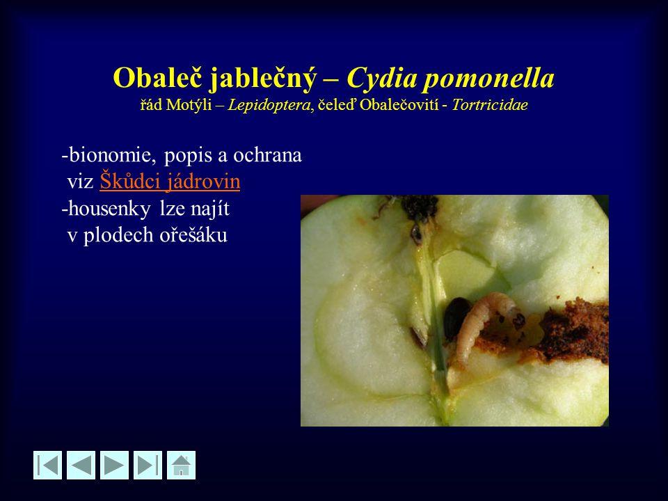 Nosatec lískový – Curculio nucum řád Brouci – Coleoptera, čeleď Nosatcovití - Curculionidae -velikost brouka 6-9 mm -zbarvení hnědavé -brouci se líhnou v V -v V-VI vykusují otvory do oříšků -larvy se vyvíjí uvnitř oříšků, opadávají nebo zůstanou plné drtě na keři -na oříšcích jsou otvory cca 2 mm -larvy se kuklí v půdě -nejvýznamnější škůdce lísky OCHRANA: pěstování odolnějších odrůd, kypření půdy pod keři před zimou, na jaře proti broukům insekticidy