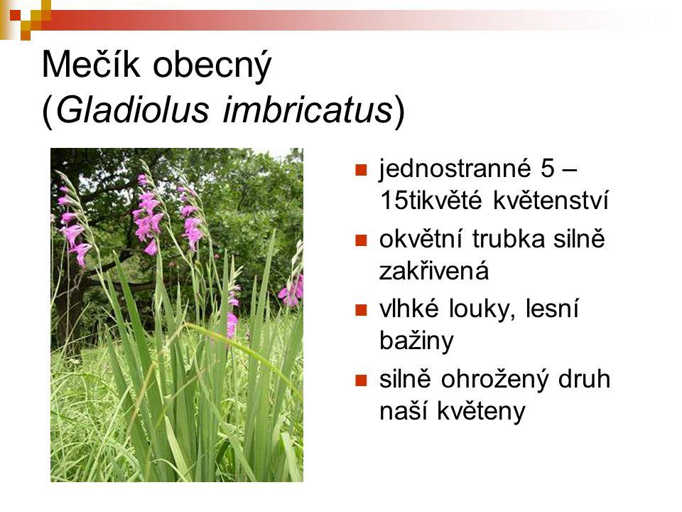 Mečík obecný (Gladiolus imbricatus) jednostranné 5 – 15tikvěté květenství okvětní trubka silně zakřivená vlhké louky, lesní bažiny silně ohrožený druh