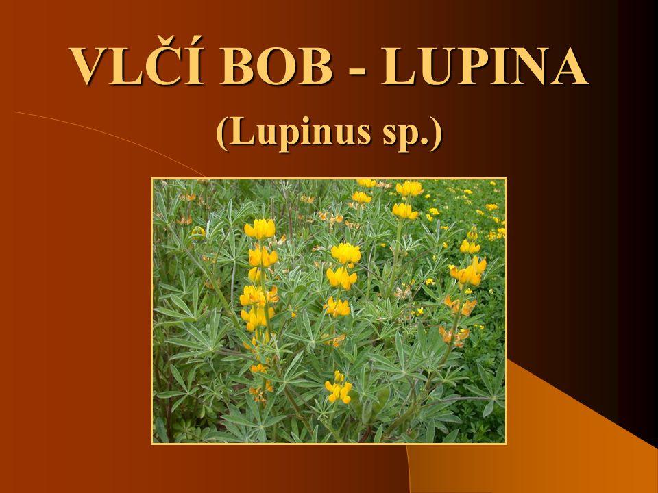 VLČÍ BOB - LUPINA (Lupinus sp.)