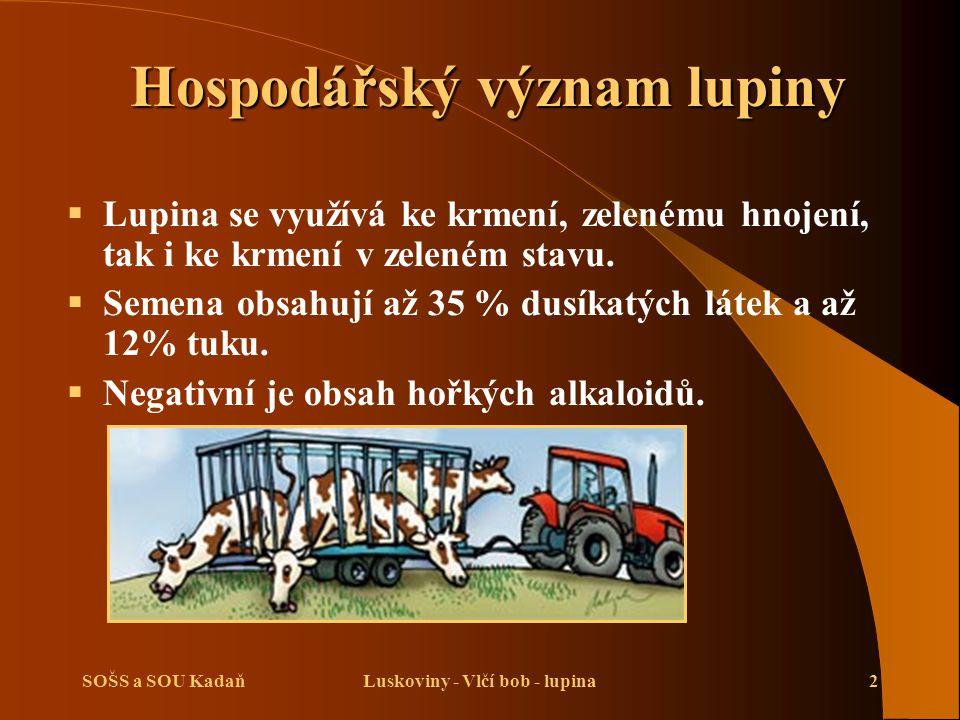SOŠS a SOU KadaňLuskoviny - Vlčí bob - lupina2 Hospodářský význam lupiny  Lupina se využívá ke krmení, zelenému hnojení, tak i ke krmení v zeleném st