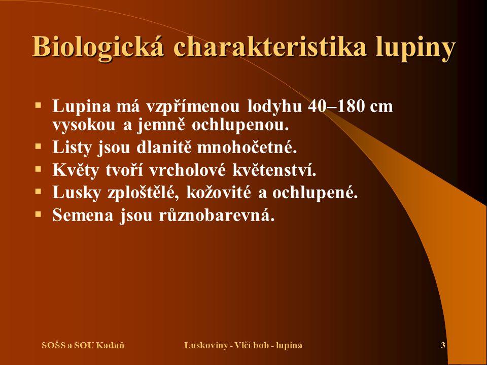 SOŠS a SOU KadaňLuskoviny - Vlčí bob - lupina3 Biologická charakteristika lupiny  Lupina má vzpřímenou lodyhu 40–180 cm vysokou a jemně ochlupenou. 