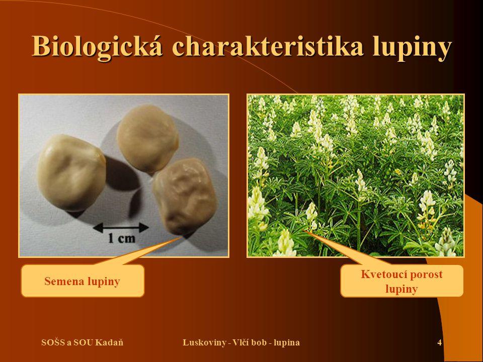 SOŠS a SOU KadaňLuskoviny - Vlčí bob - lupina4 Biologická charakteristika lupiny Semena lupiny Kvetoucí porost lupiny