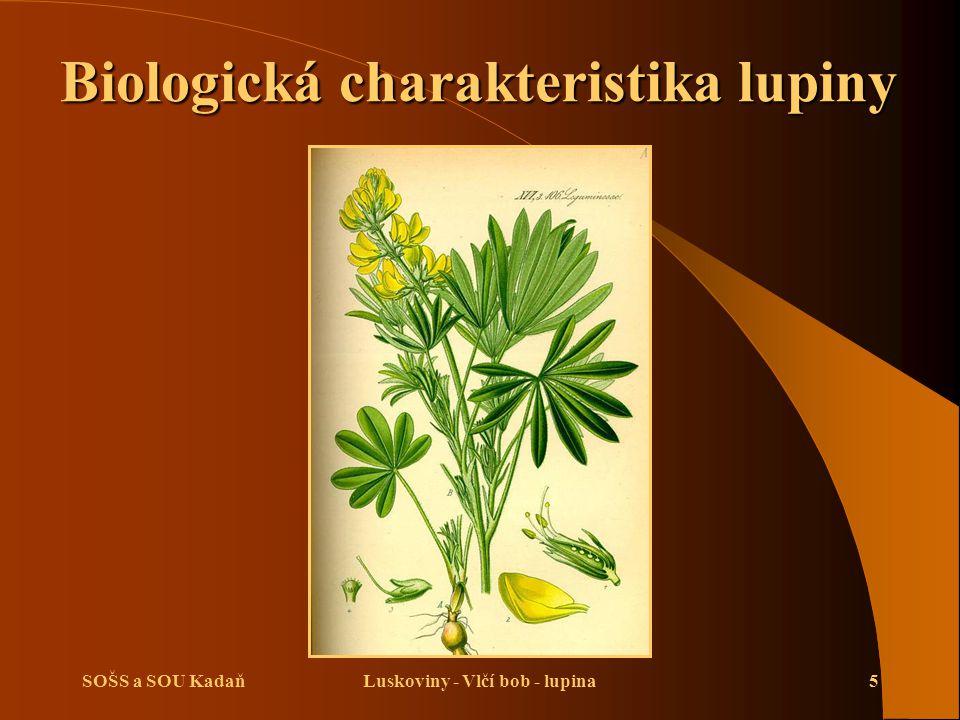 SOŠS a SOU KadaňLuskoviny - Vlčí bob - lupina5 Biologická charakteristika lupiny