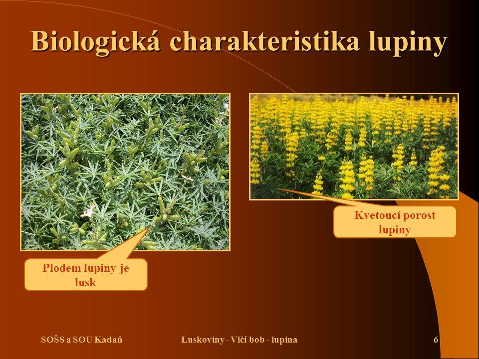 SOŠS a SOU KadaňLuskoviny - Vlčí bob - lupina6 Plodem lupiny je lusk Kvetoucí porost lupiny Biologická charakteristika lupiny