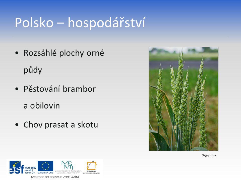 Polsko – hospodářství Rozsáhlé plochy orné půdy Pěstování brambor a obilovin Chov prasat a skotu Pšenice