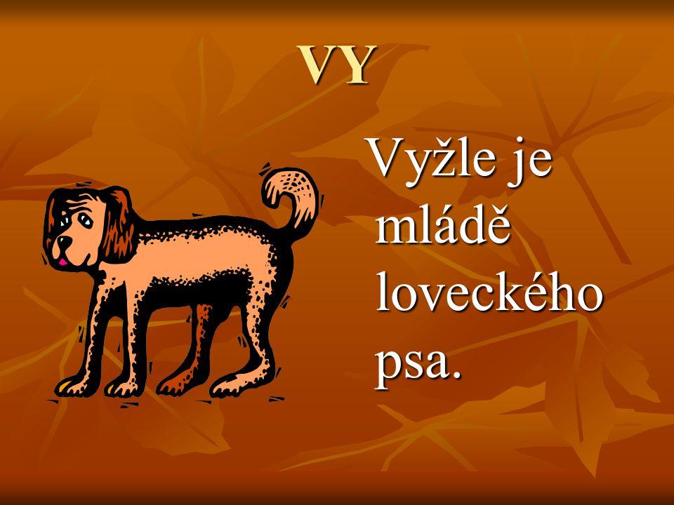 VY Vyžle je mládě loveckého psa. Vyžle je mládě loveckého psa.