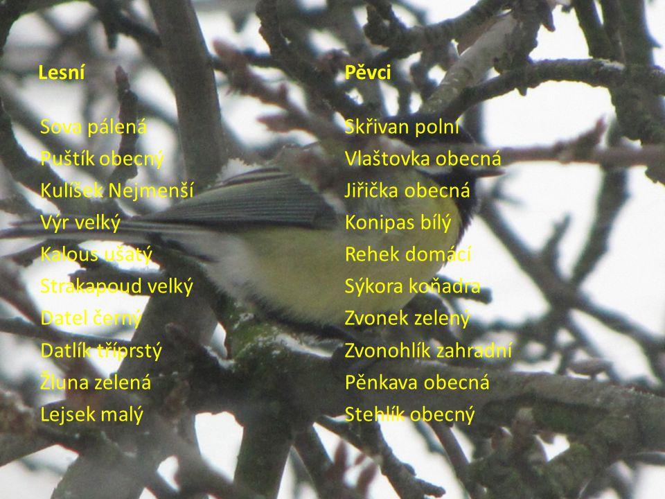 Zdroje obrázků - autorka Zpracovala: Mgr.Vlasta Foltová, ZŠ Nový Jičín, Komenského 68, p.
