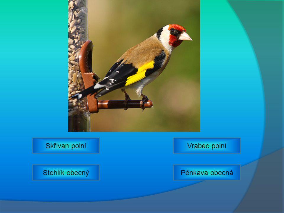 Vrabec polníSkřivan polní Pěnkava obecnáStehlík obecný