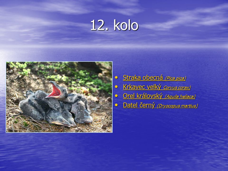12. kolo Straka obecná (Pica pica) Straka obecná (Pica pica) Straka obecná (Pica pica) Straka obecná (Pica pica) Krkavec velký Corvus corax) Krkavec v