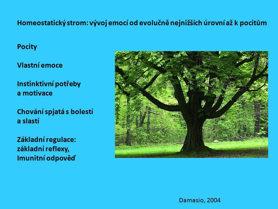Pocity Vlastní emoce Instinktivní potřeby a motivace Chování spjatá s bolestí a slastí Základní regulace: základní reflexy, Imunitní odpověď Homeostatický strom: vývoj emocí od evolučně nejnižších úrovní až k pocitům Damasio, 2004