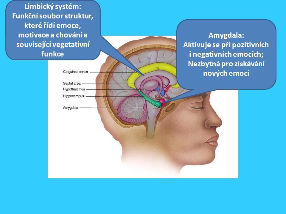 Amygdala: Aktivuje se při pozitivních i negativních emocích; Nezbytná pro získávání nových emocí Limbický systém: Funkční soubor struktur, které řídí emoce, motivace a chování a související vegetativní funkce