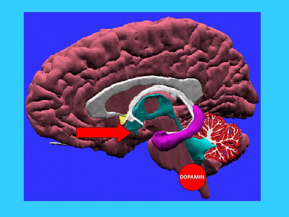 Drogová závislost Nepřirozené podněty: drogy Drogy aktivují systém víc než přirozené podněty a mění jeho činnost Ventrální tegmentální oblast, VTA dopamin Drogová závislost jako zneužití původní evoluční funkce systému odměny