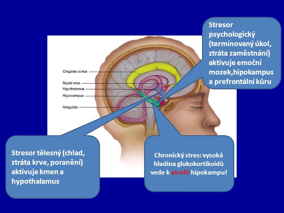 Stresor psychologický (termínovaný úkol, ztráta zaměstnání) aktivuje emoční mozek,hipokampus a prefrontální kůru Stresor tělesný (chlad, ztráta krve, poranění) aktivuje kmen a hypothalamus Chronický stres: vysoká hladina glukokortikoidů vede k atrofii hipokampu!