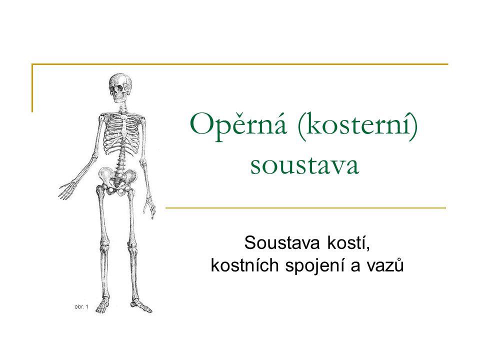 Opěrná (kosterní) soustava Soustava kostí, kostních spojení a vazů obr. 1