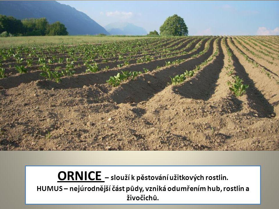 ORNICE – slouží k pěstování užitkových rostlin.