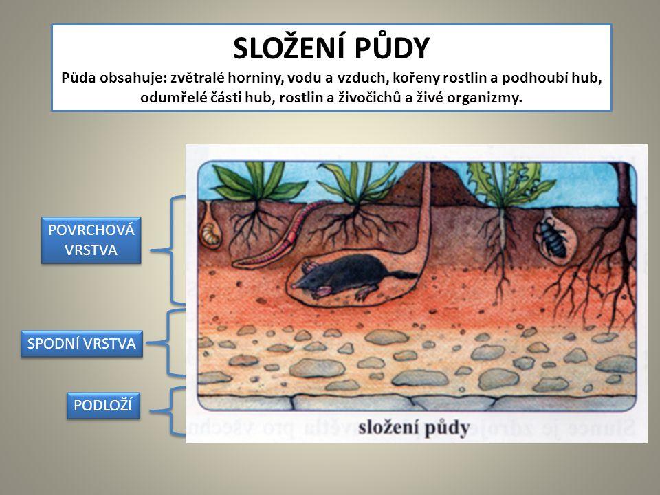 SPODNÍ VRSTVA SLOŽENÍ PŮDY Půda obsahuje: zvětralé horniny, vodu a vzduch, kořeny rostlin a podhoubí hub, odumřelé části hub, rostlin a živočichů a živé organizmy.