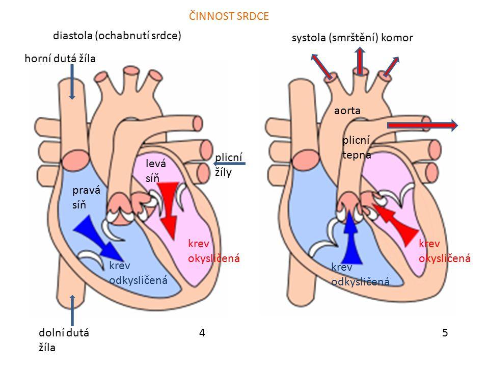 54 systola (smrštění) komor diastola (ochabnutí srdce) pravá síň aorta plicní tepna ČINNOST SRDCE horní dutá žíla dolní dutá žíla krev odkysličená kre